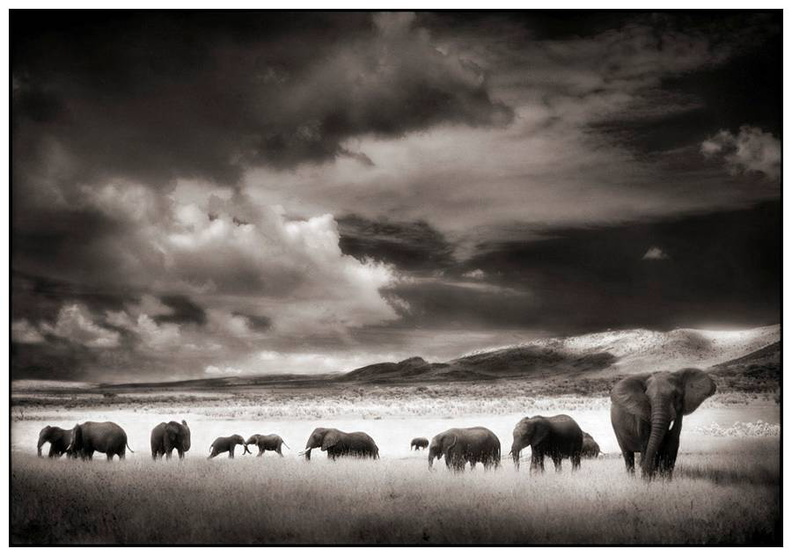 Africa black and white   (10).jpg